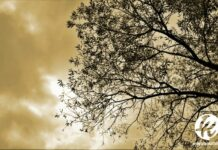 Kaidah Dahan Pohon