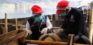 Petugas Temukan Hewan Kurban Sakit Dan Tak Layak Jual Di Bandung 169