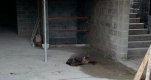 Teror Kepala Babi Di Masjid Agung Compiegene