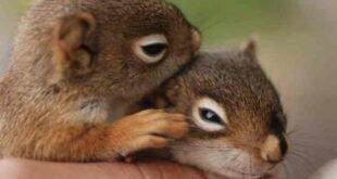 cinta binatang