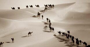 bangsa arab
