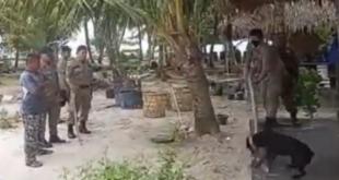 Penangkapan anjing sampai mati